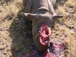 poaching2013