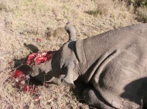 poaching2013_2