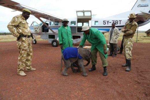 baby elephant needs help to survive