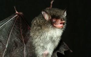 Beezlebub Bat