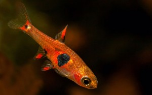 Fantastically Coloured Fish