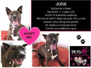 help needed_josh