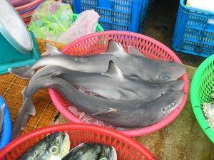 new-species-shark-found-fish-market