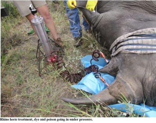 rhino_rescue_injects poison_endangered