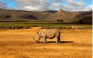 rhino_wild_endangered_soti_