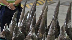 _rhinohorns