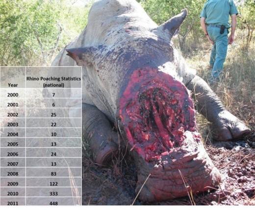 SA-poaching-stats-