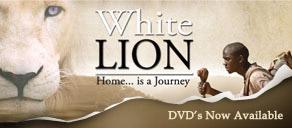 white-lion4