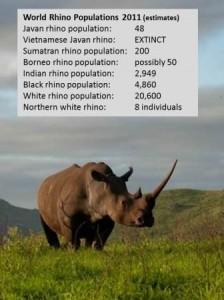 world-rhino-figures-2011comp-224x300