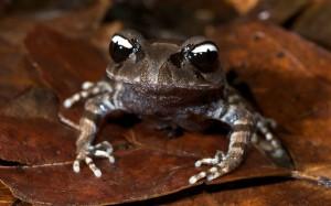 Ying Yang Frog
