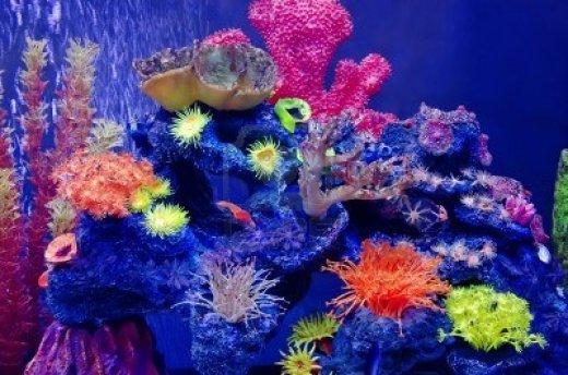 variety-of-corals-in-aquarium-close-up