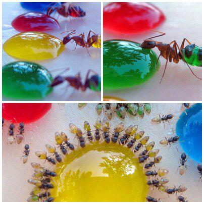 HOW_AWESOME_ARE_ANTS