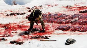 CANADA-STILL-CLUBBING-SEALS