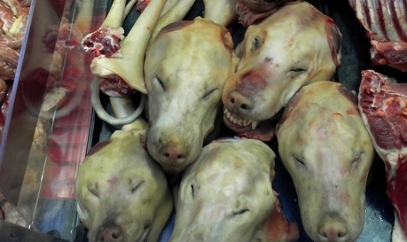 DOGS_KILLED_AND_TORTURED