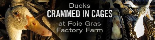 feature-foie-gras-917x237-v5