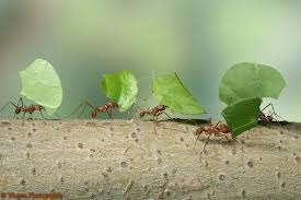 MOVING_ANT_HILLS