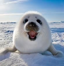 SEALS-IN-CANADA