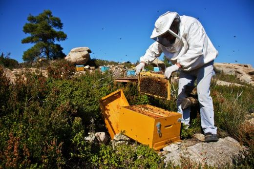 the-state-of-honey-bee