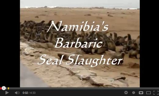 NAMIBIA-SEAL-CULLING-VIDEO