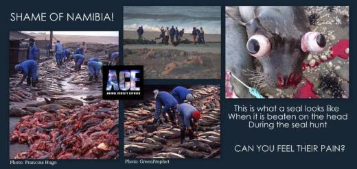 NAMIBIA-SEAL-CULLING