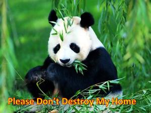 panda edit morne