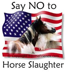 Say_no_to_horse_Slaugter_Houses