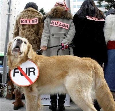 animal banning Fur farming was banned in england and wales in 2000, followed by scotland in 2002 however fur products can still be legally imported from other countries and sold.