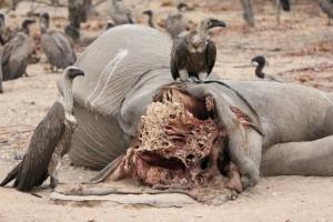 SOTI-ELEPHANTS-ARTICLE