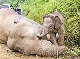 SOTI-ELEPHANTS-WITH BABY-ARTICLE