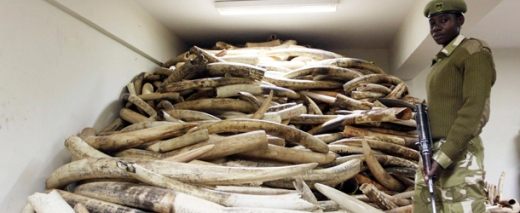 ivory_poaching_soti_illegaltrafficking