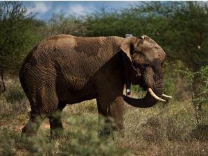 Elephant_Kruger_National_Park