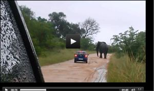 SOTI_ELEPHANT_VIDEO